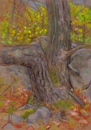 Larry Johnson artist, landscape drawing, stony brook reservation, oil pastel, colored pencil