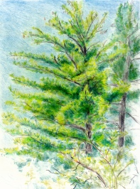 Larry Johnson artist, landscape drawing, stony brook reservation, colored pencil