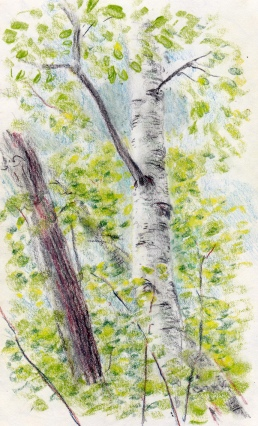 Larry Johnson artist, landscape drawing, nahantan reservation, colored pencil
