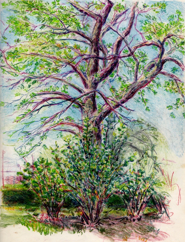 Larry Johnson artist, landscape drawing, back bay fens boston, colored pencil