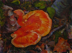 big orange fungus