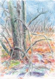 landscape 02 4-11-14