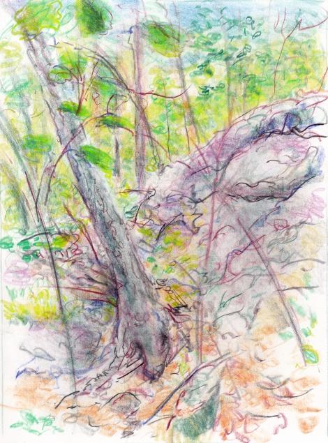 landscape burn bottom tree 6-16-14