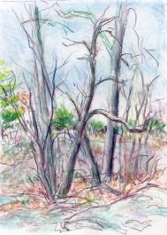 landscape dead tree 01 4-21-14