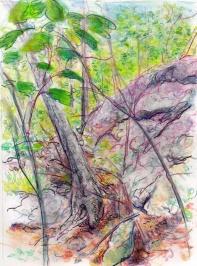 landscape part two 6-17-14