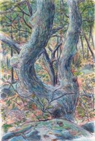 landscape 1998