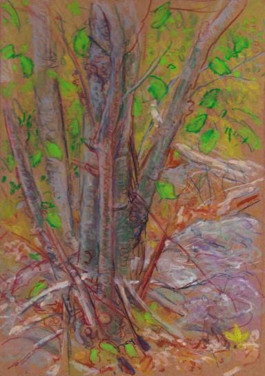 landscape 5-24-15