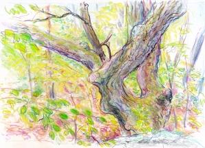 landscape 6-20-16